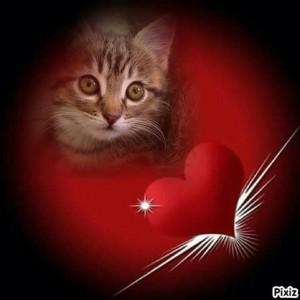 Foto efecto de corazon para tu foto