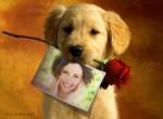 Fotomontaje de un perro y una rosa