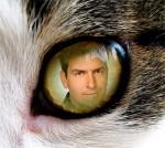Fotomontaje en un ojo de gato